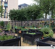 Greyfriars Community Garden by ERZ shows how vacant ground can be used to grow vegetables