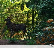 A life-size stag sculpture has been erected using nothing but the leaves of Arran Whitebeam and bracken
