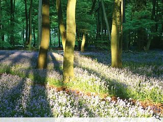 Woodland Trust to plant 1m trees in February