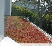 Sedum roof over entrance canopy at gallery.